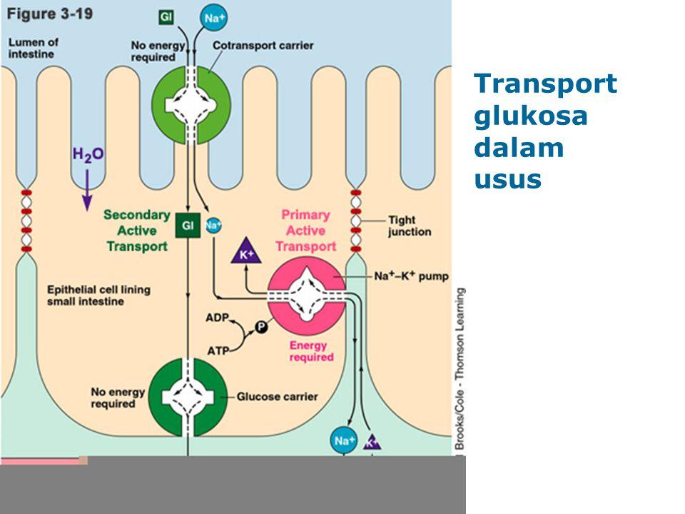 Transport glukosa dalam usus