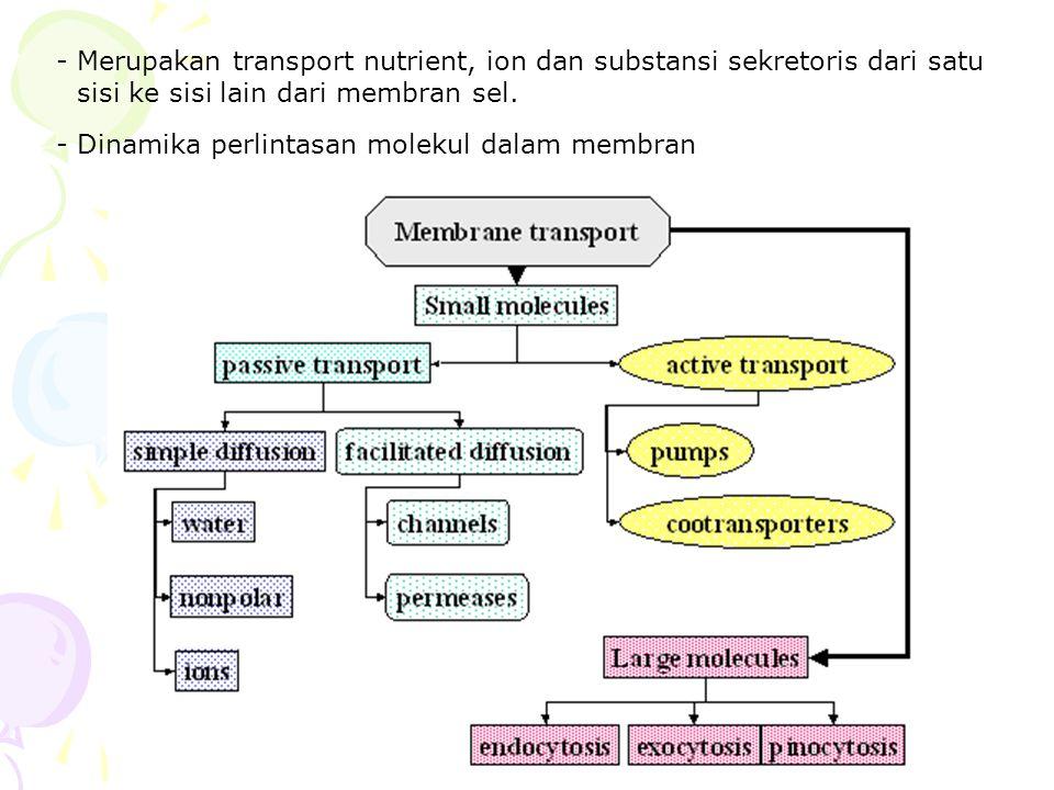 - Merupakan transport nutrient, ion dan substansi sekretoris dari satu sisi ke sisi lain dari membran sel. - Dinamika perlintasan molekul dalam membra