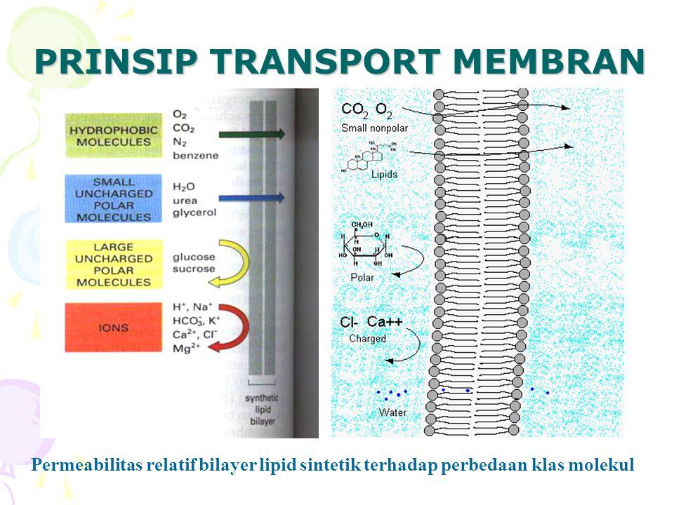 PRINSIP TRANSPORT MEMBRAN Permeabilitas relatif bilayer lipid sintetik terhadap perbedaan klas molekul