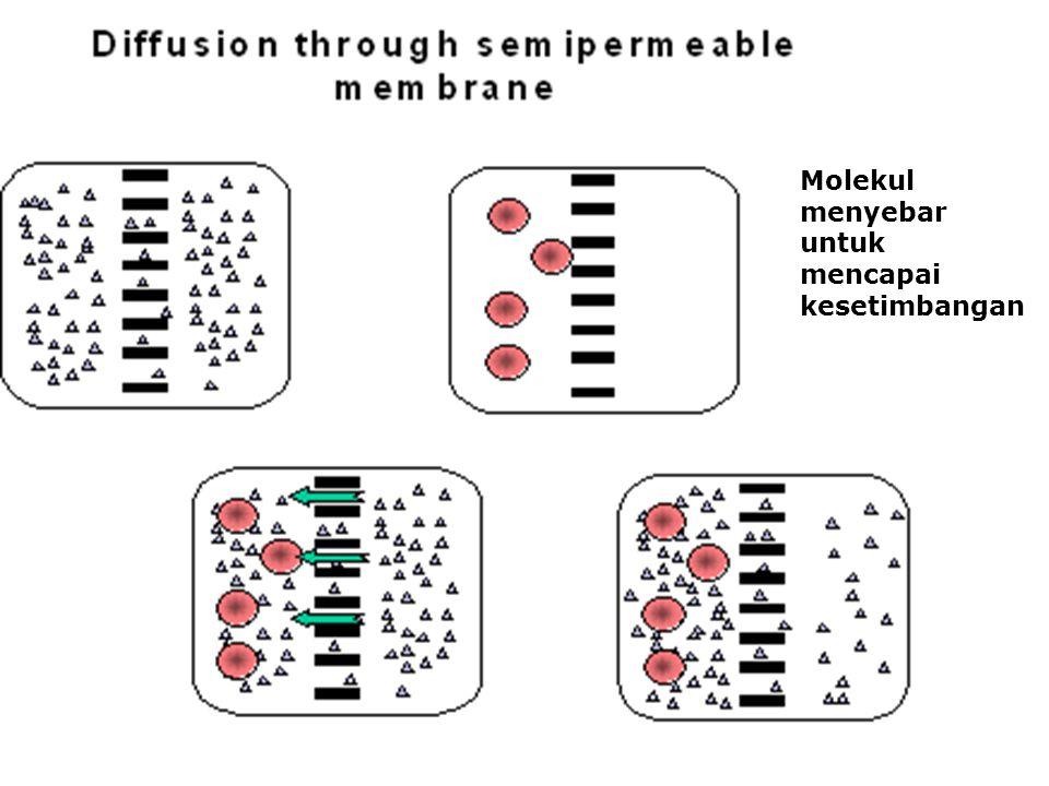 Molekul menyebar untuk mencapai kesetimbangan
