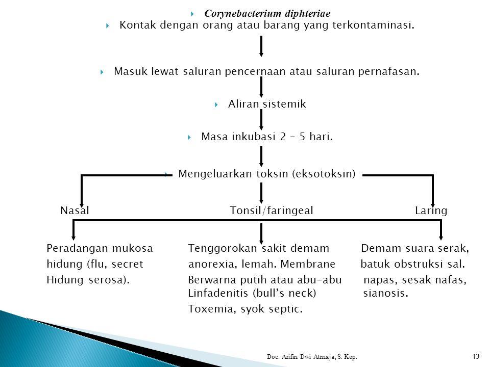 Doc. Arifin Dwi Atmaja, S. Kep. 13  Corynebacterium diphteriae  Kontak dengan orang atau barang yang terkontaminasi.  Masuk lewat saluran pencernaa