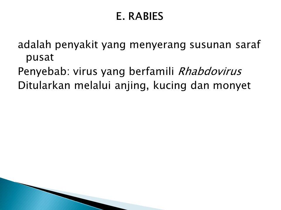 E. RABIES adalah penyakit yang menyerang susunan saraf pusat Penyebab: virus yang berfamili Rhabdovirus Ditularkan melalui anjing, kucing dan monyet