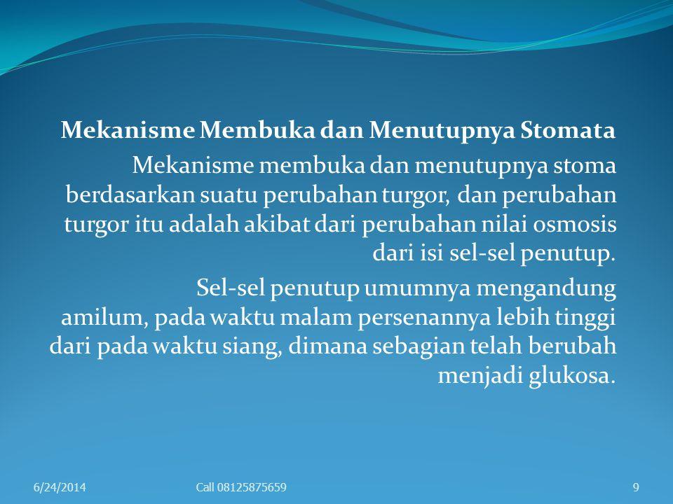 Peristiwa selengkapnya adalah sebagai berikut, pada pagi hari masih terdapat amilum di dalam sel-sel penutup stoma.