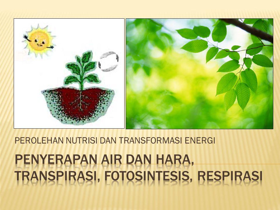 Oksigen 6CO 2 + 6H 2 OC 6 H 12 O 6 + 6O 2 Cahaya matahari Klorofil Karbon dioksid a Air Karbohidrat