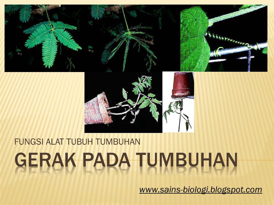 FUNGSI ALAT TUBUH TUMBUHAN www.sains-biologi.blogspot.com