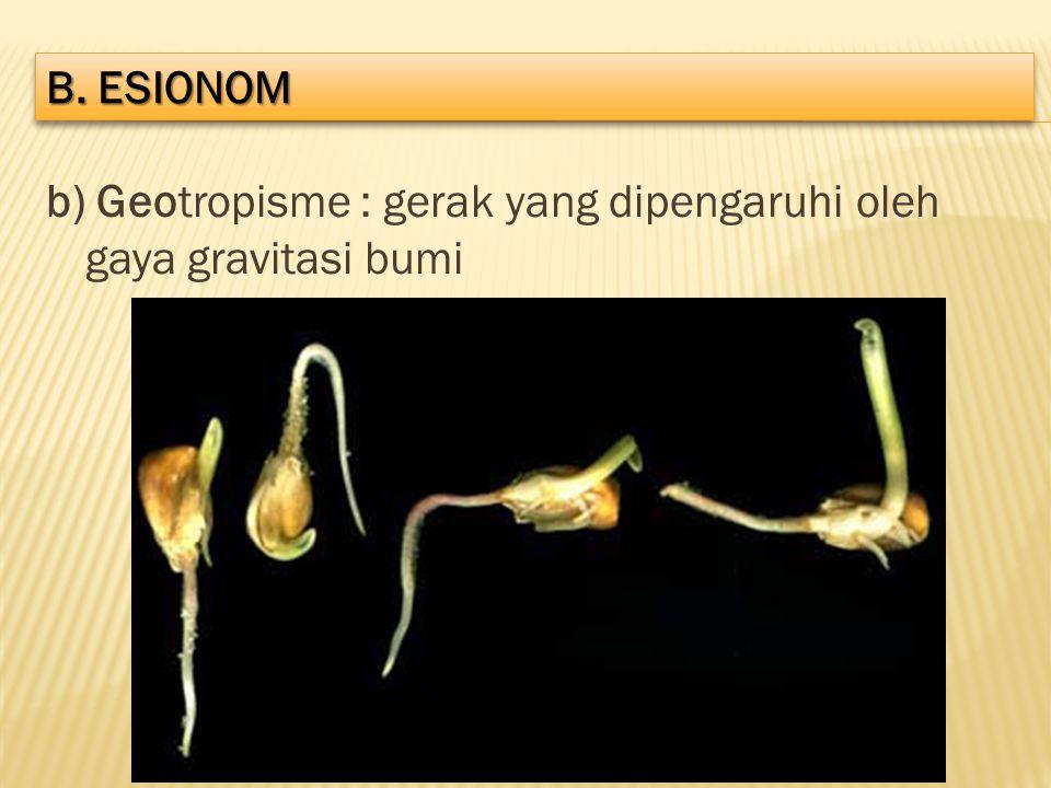 b) Geotropisme : gerak yang dipengaruhi oleh gaya gravitasi bumi B. ESIONOM