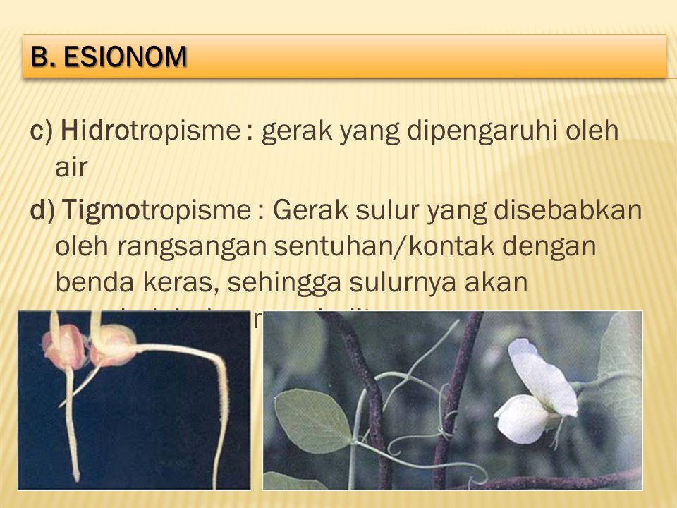 c) Hidrotropisme : gerak yang dipengaruhi oleh air d) Tigmotropisme : Gerak sulur yang disebabkan oleh rangsangan sentuhan/kontak dengan benda keras,