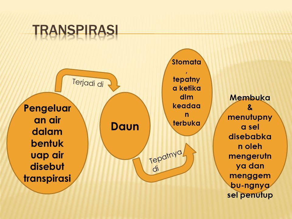 Pengeluar an air dalam bentuk uap air disebut transpirasi Daun Stomata, tepatny a ketika dlm keadaa n terbuka Membuka & menutupny a sel disebabka n ol