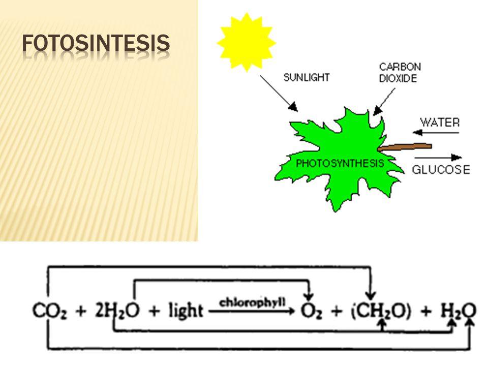 Gerak yang dipengaruhi oleh rangsangan dari luar tubuh tumbuhan.
