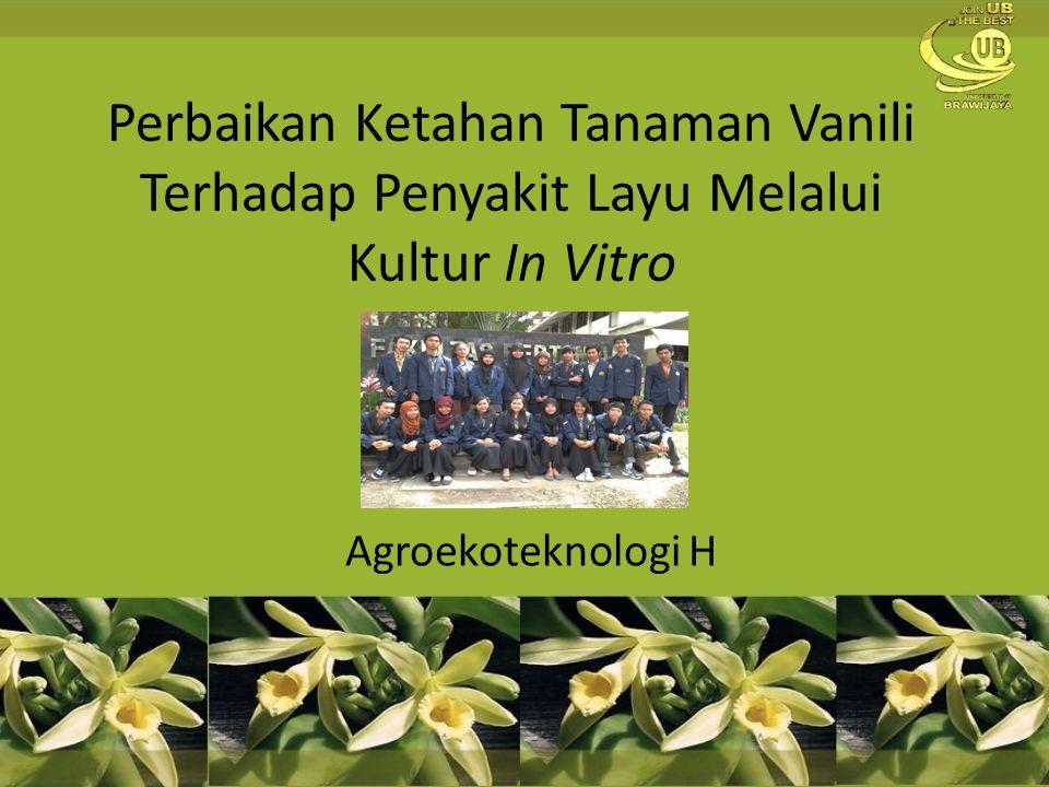 Perbaikan Ketahan Tanaman Vanili Terhadap Penyakit Layu Melalui Kultur In Vitro Agroekoteknologi H