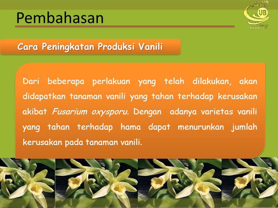 Pembahasan Cara Peningkatan Produksi Vanili Dari beberapa perlakuan yang telah dilakukan, akan didapatkan tanaman vanili yang tahan terhadap kerusakan