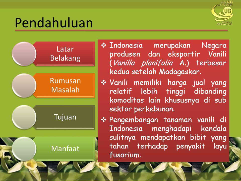 Pendahuluan Latar Belakang Rumusan Masalah Tujuan Manfaat  Indonesia merupakan Negara produsen dan eksportir Vanili (Vanilla planifolia A.) terbesar