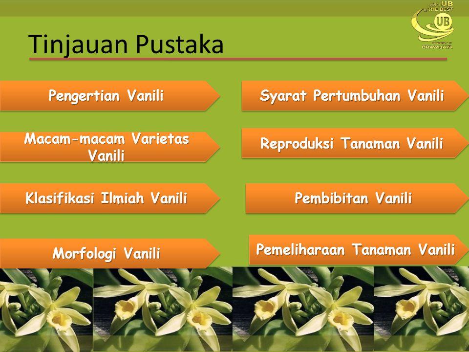 Pembahasan Penyebab Penurunan Produksi Vanili  Tanaman vanili sangat rentan dengan penyakit busuk pangkal batang yang disebabkan oleh Fusarium oxysporum.
