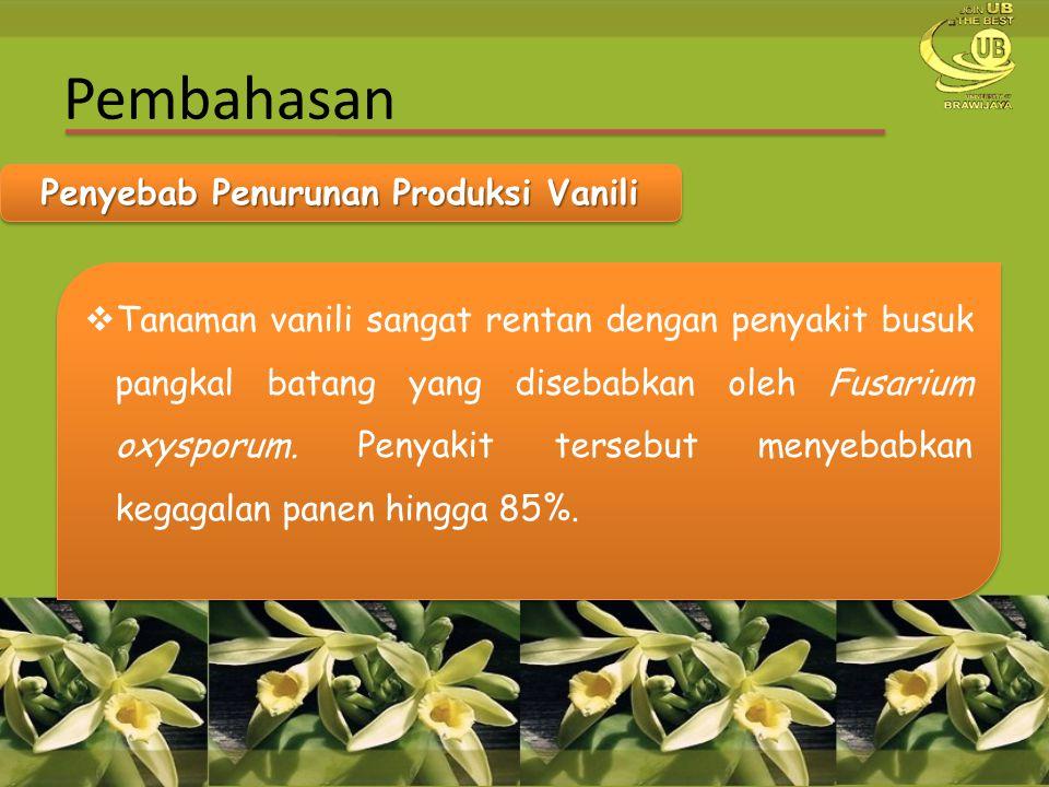 Pembahasan Penyebab Penurunan Produksi Vanili  Tanaman vanili sangat rentan dengan penyakit busuk pangkal batang yang disebabkan oleh Fusarium oxyspo