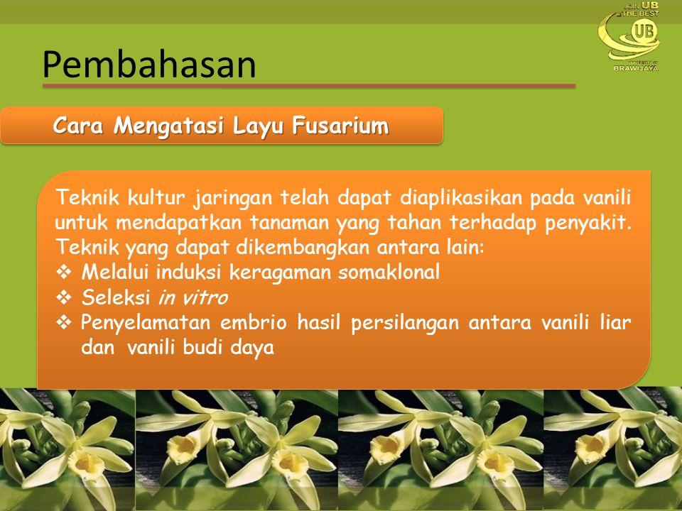 Pembahasan Cara Mengatasi Layu Fusarium Teknik kultur jaringan telah dapat diaplikasikan pada vanili untuk mendapatkan tanaman yang tahan terhadap pen