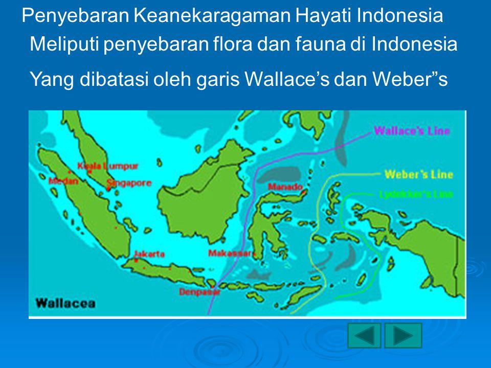 Penyebaran Keanekaragaman Hayati Indonesia Meliputi penyebaran flora dan fauna di Indonesia Yang dibatasi oleh garis Wallace's dan Weber s