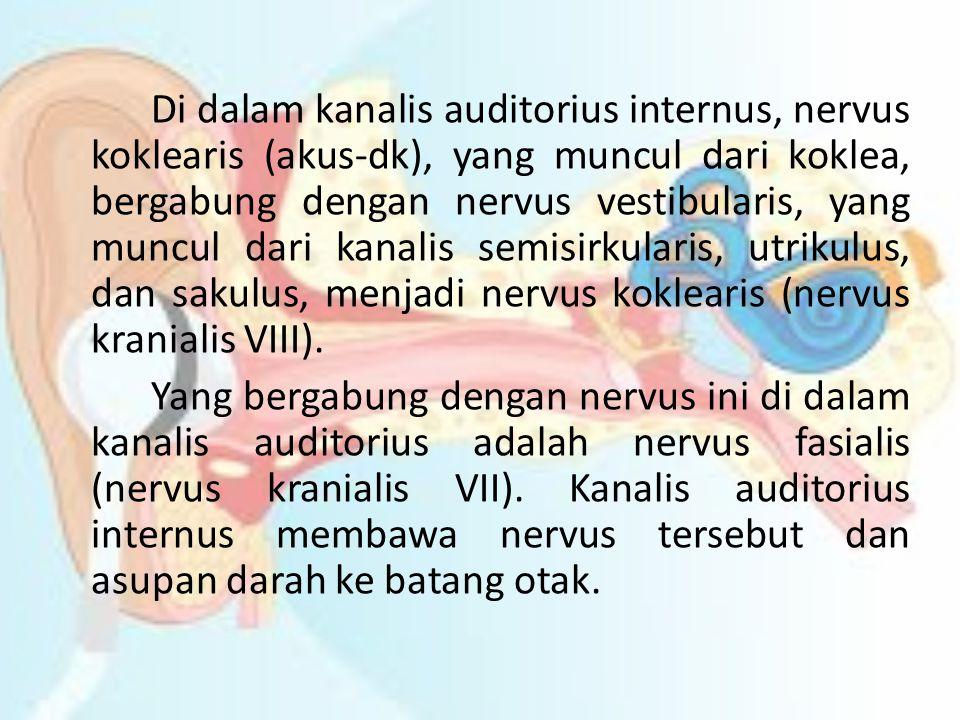 Di dalam kanalis auditorius internus, nervus koklearis (akus-dk), yang muncul dari koklea, bergabung dengan nervus vestibularis, yang muncul dari kana