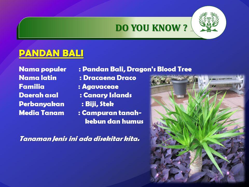.…………… DO YOU KNOW ?..…………… PANDAN BALI Nama populer : Pandan Bali, Dragon's Blood Tree Nama latin : Dracaena Draco Familia : Agavaceae Daerah asal :