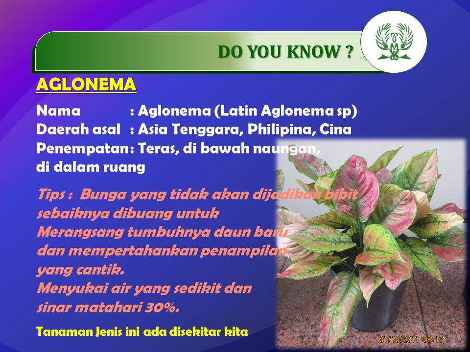 .…………… DO YOU KNOW ..…………… AGLONEMA Nama: Aglonema (Latin Aglonema sp) Daerah asal: Asia Tenggara, Philipina, Cina Penempatan: Teras, di bawah naungan, di dalam ruang Tips : Bunga yang tidak akan dijadikan bibit sebaiknya dibuang untuk Merangsang tumbuhnya daun baru dan mempertahankan penampilan yang cantik.