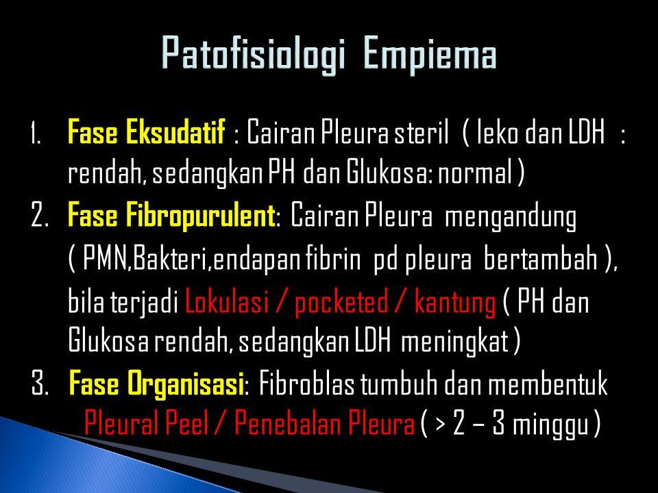 1. Fase Eksudatif : Cairan Pleura steril ( leko dan LDH : rendah, sedangkan PH dan Glukosa: normal ) 2. Fase Fibropurulent : Cairan Pleura mengandung