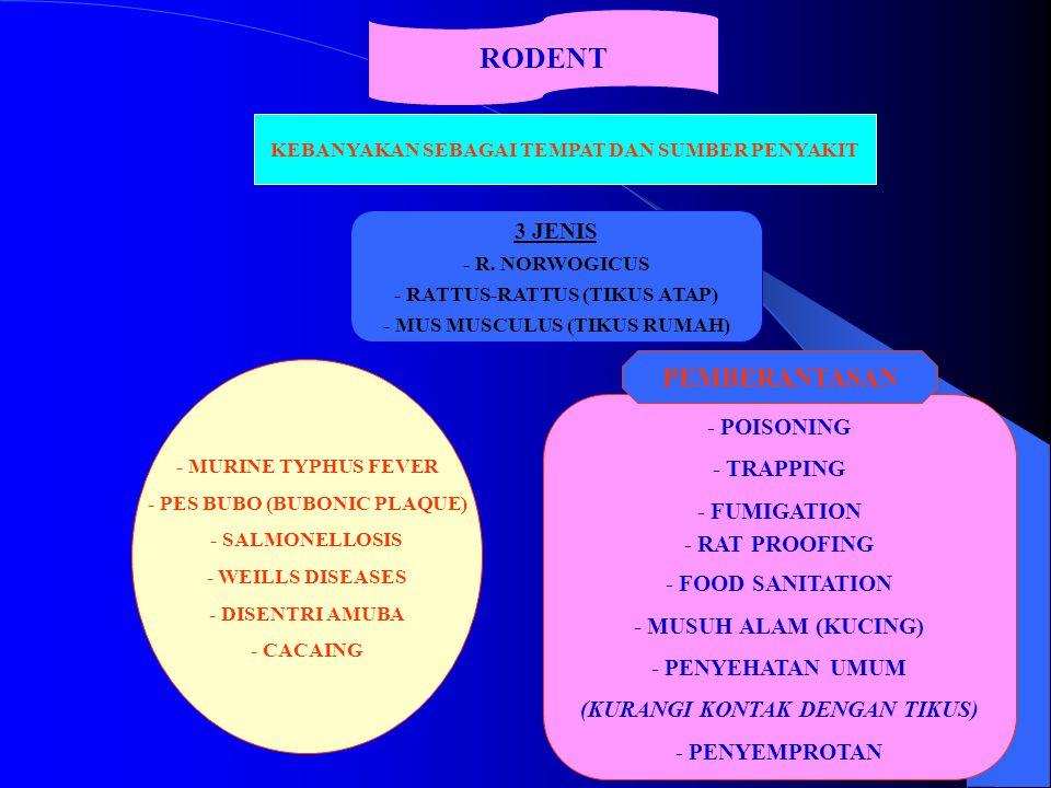 RODENT KEBANYAKAN SEBAGAI TEMPAT DAN SUMBER PENYAKIT 3 JENIS - R. NORWOGICUS - RATTUS-RATTUS (TIKUS ATAP) - MUS MUSCULUS (TIKUS RUMAH) - MURINE TYPHUS