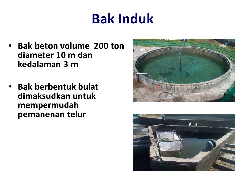 Bak Induk • Bak beton volume 200 ton diameter 10 m dan kedalaman 3 m • Bak berbentuk bulat dimaksudkan untuk mempermudah pemanenan telur