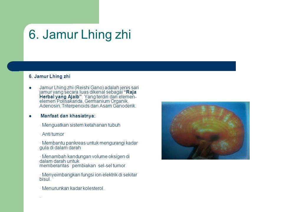 """6. Jamur Lhing zhi  Jamur Lhing zhi (Reishi Gano) adalah jenis sari jamur yang secara luas dikenal sebagai """"Raja Herbal yang Ajaib"""". Yang terdiri dar"""