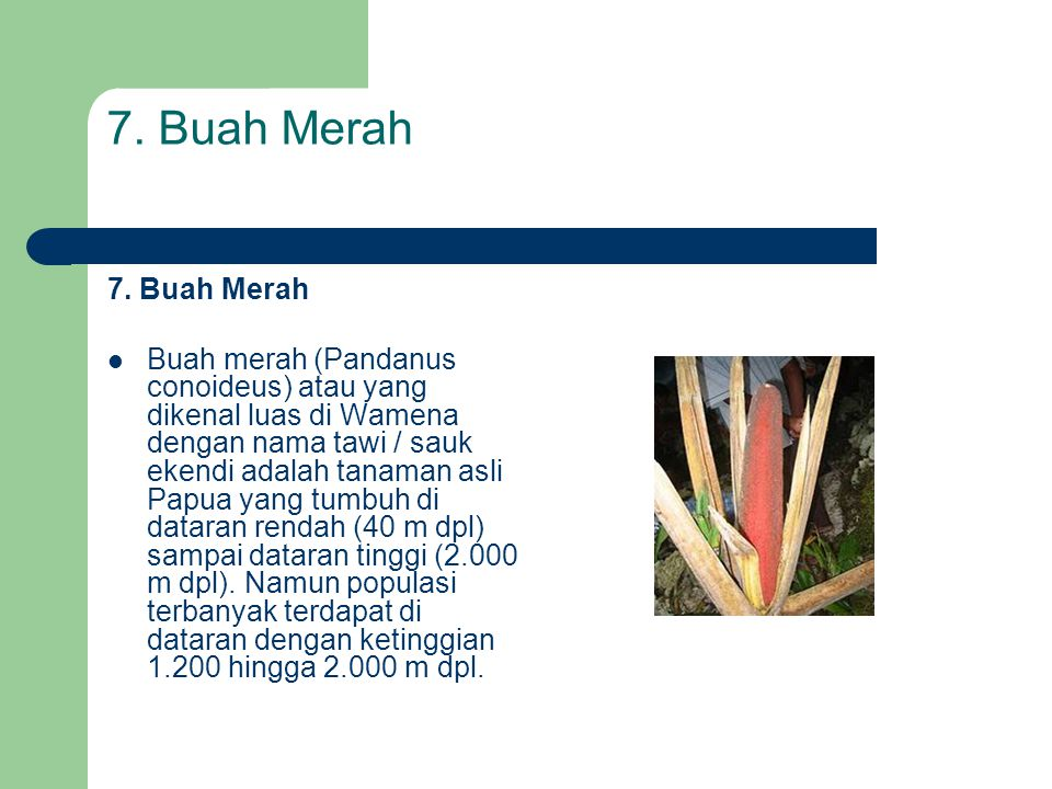 7. Buah Merah  Buah merah (Pandanus conoideus) atau yang dikenal luas di Wamena dengan nama tawi / sauk ekendi adalah tanaman asli Papua yang tumbuh
