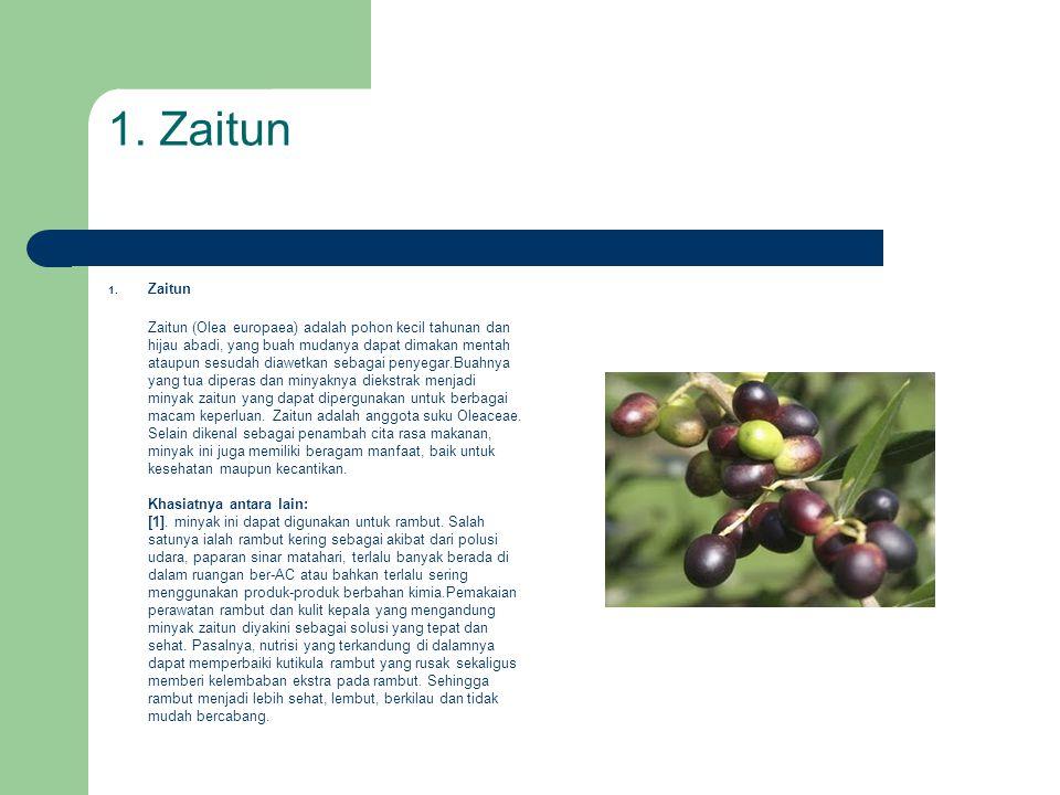 1. Zaitun Zaitun (Olea europaea) adalah pohon kecil tahunan dan hijau abadi, yang buah mudanya dapat dimakan mentah ataupun sesudah diawetkan sebagai