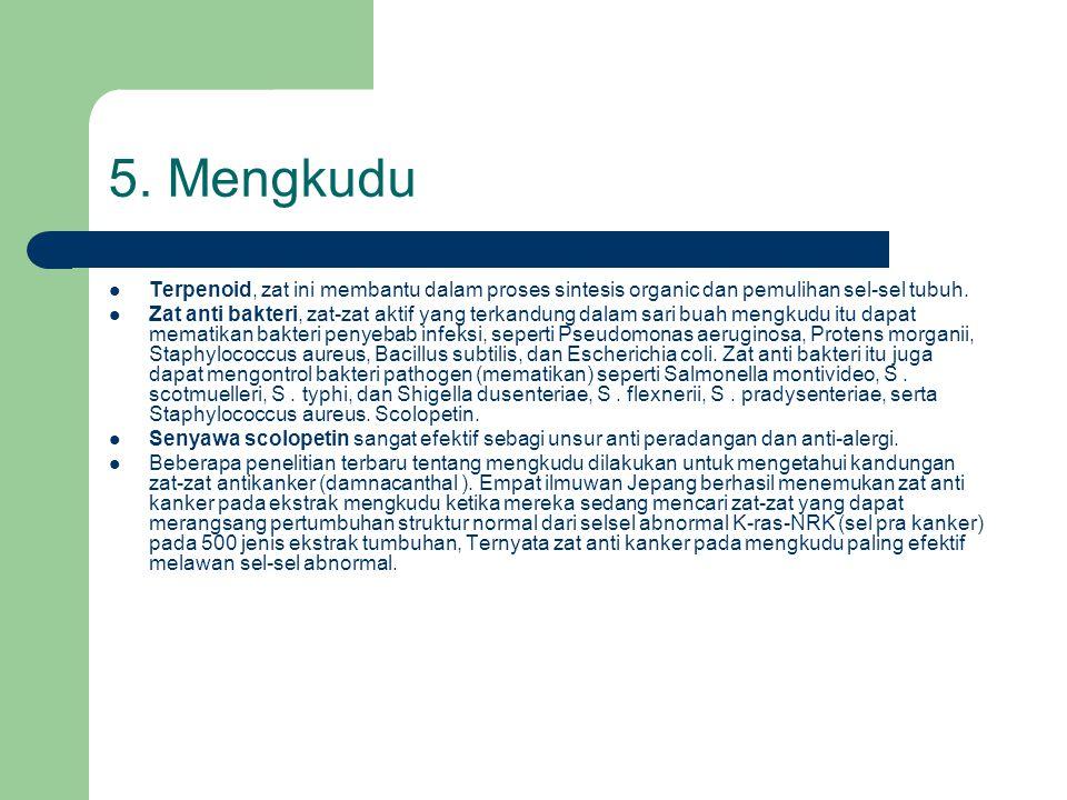 5. Mengkudu  Terpenoid, zat ini membantu dalam proses sintesis organic dan pemulihan sel-sel tubuh.  Zat anti bakteri, zat-zat aktif yang terkandung