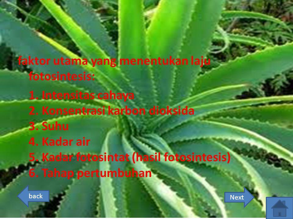 faktor utama yang menentukan laju fotosintesis: 1. Intensitas cahaya 2. Konsentrasi karbon dioksida 3. Suhu 4. Kadar air 5. Kadar fotosintat (hasil fo