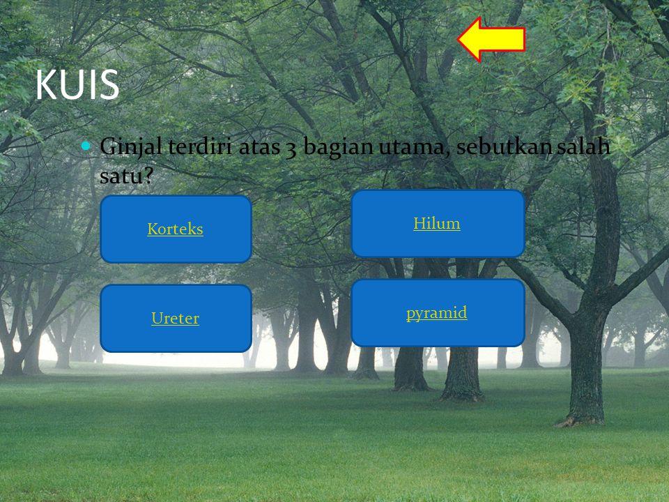 KUIS  Ginjal terdiri atas 3 bagian utama, sebutkan salah satu? Korteks Ureter Hilum pyramid