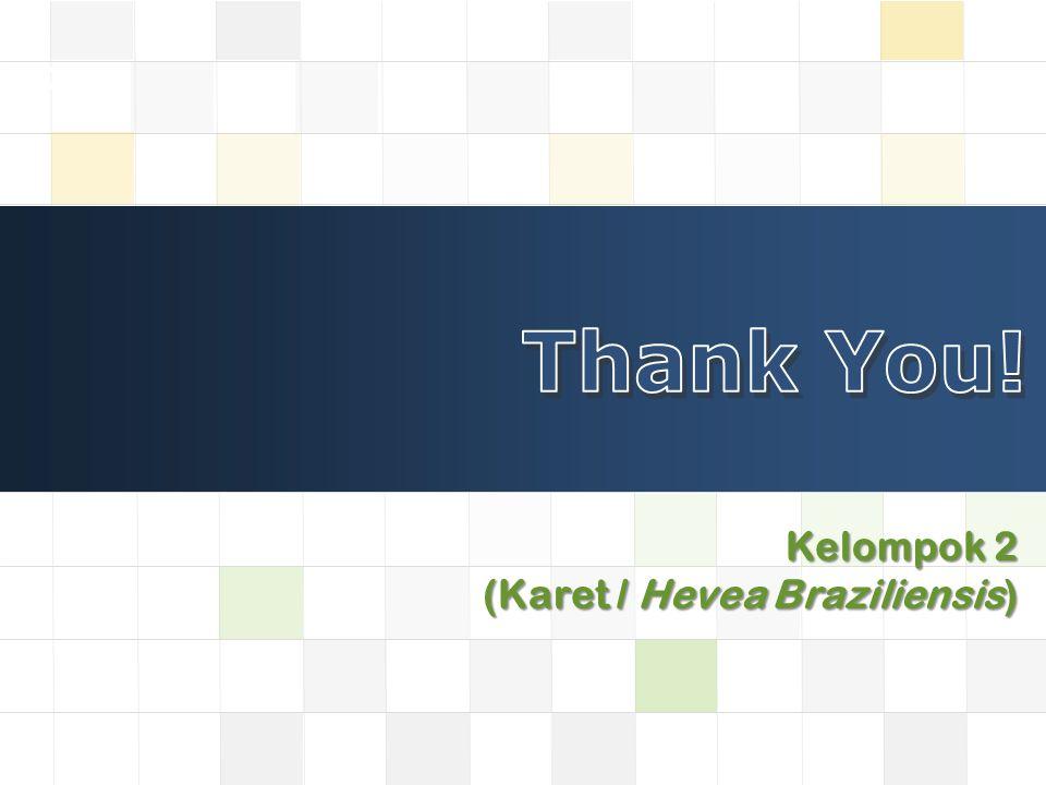 LOGO Kelompok 2 (Karet / Hevea Braziliensis)