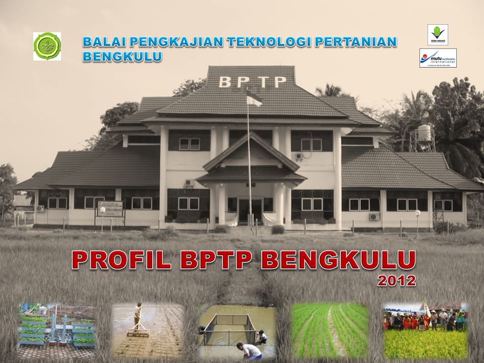 Sejalan dengan Visi Balai Besar Pengkajian dan Pengembangan Teknologi Pertanian tahun 2010-2014, untuk menjadi lembaga pengkajian dan pengembangan inovasi pertanian tepat guna bertaraf internasional, maka visi BPTP Bengkulu adalah: