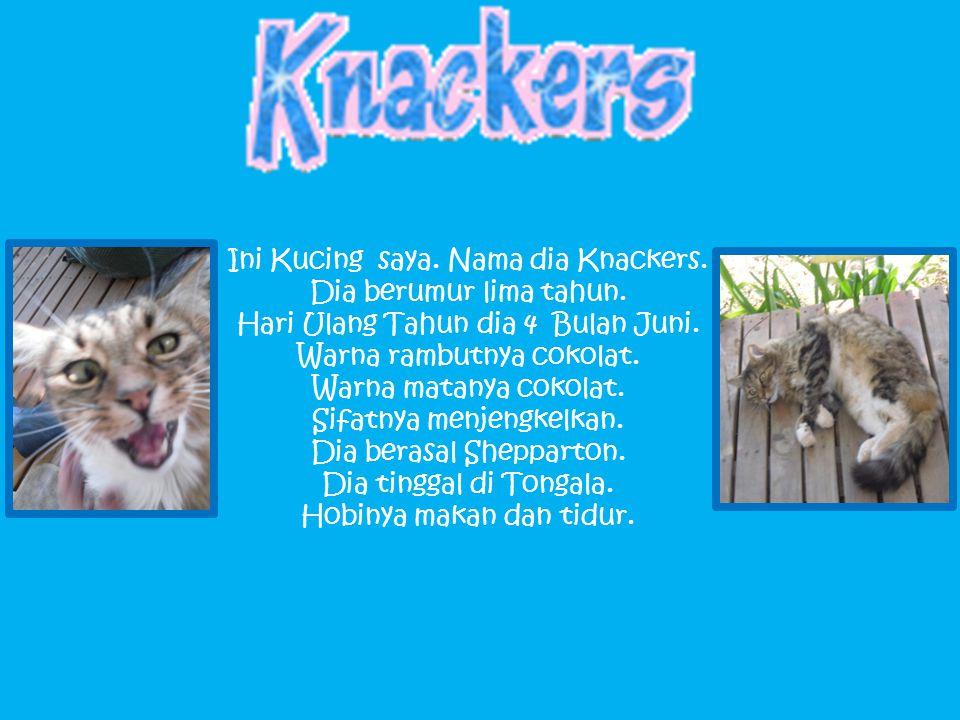 Ini Kucing saya. Nama dia Knackers. Dia berumur lima tahun.