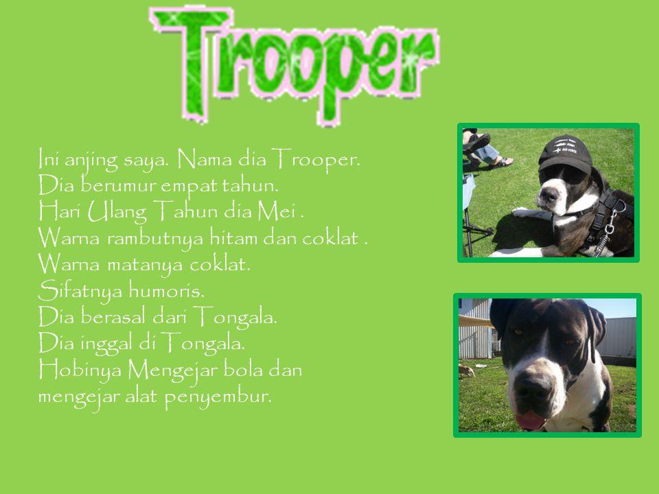 Ini anjing saya. Nama dia Trooper. Dia berumur empat tahun.