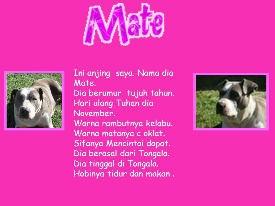 Ini anjing saya. Nama dia Mate. Dia berumur tujuh tahun.