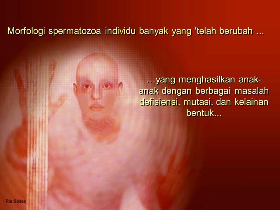 Morfologi spermatozoa individu banyak yang telah berubah...