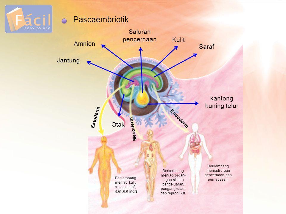 Pascaembriotik Jantung Amnion Saluran pencernaan Kulit Saraf kantong kuning telur Otak Endoderm Mesoderm Ektoderm Berkembang menjadi organ pencernaan