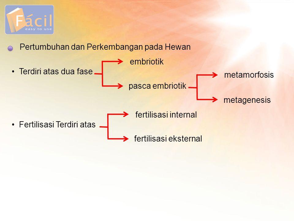 Pertumbuhan dan Perkembangan pada Hewan • Terdiri atas dua fase embriotik pasca embriotik metamorfosis metagenesis • Fertilisasi Terdiri atas fertilis