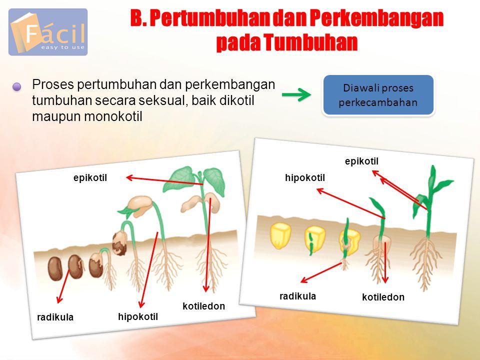 B. Pertumbuhan dan Perkembangan pada Tumbuhan Proses pertumbuhan dan perkembangan tumbuhan secara seksual, baik dikotil maupun monokotil Diawali prose