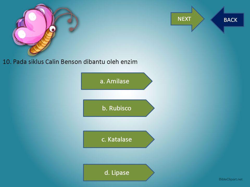 NEXT BACK 10. Pada siklus Calin Benson dibantu oleh enzim a. Amilase b. Rubisco c. Katalase d. Lipase