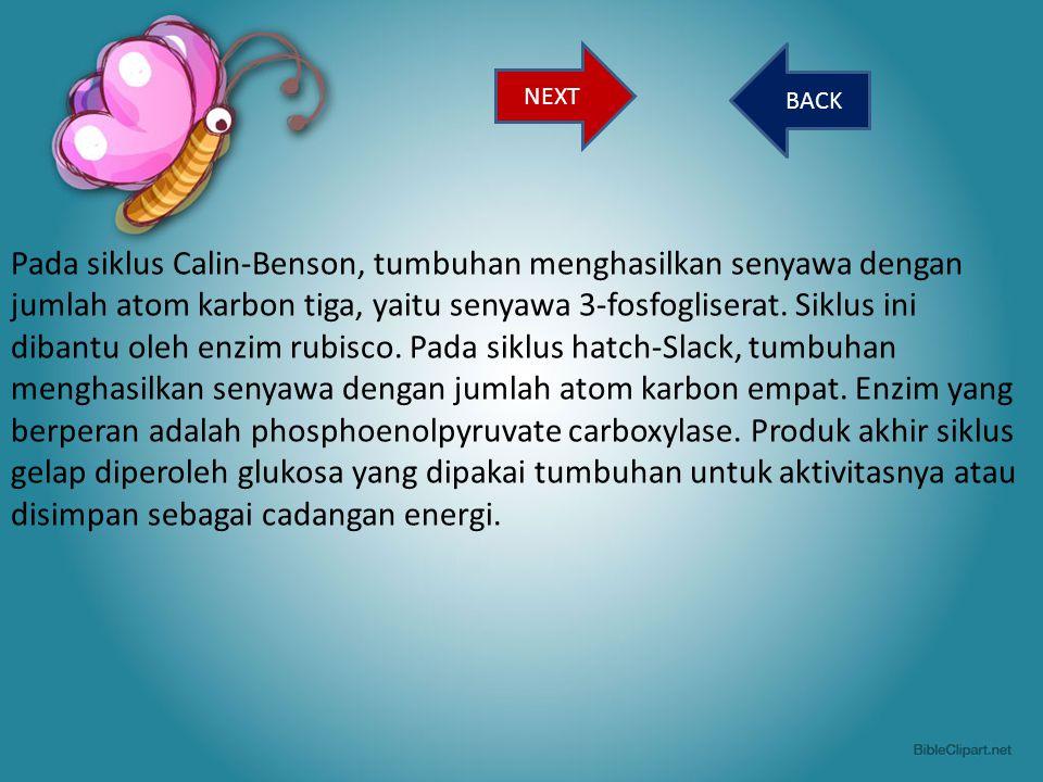 BACK Pada siklus Calin-Benson, tumbuhan menghasilkan senyawa dengan jumlah atom karbon tiga, yaitu senyawa 3-fosfogliserat. Siklus ini dibantu oleh en