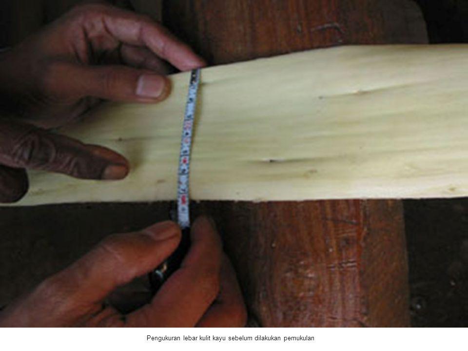 Pengukuran lebar kulit kayu sebelum dilakukan pemukulan