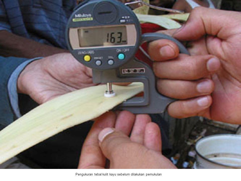 Pengukuran tebal kulit kayu sebelum dilakukan pemukulan