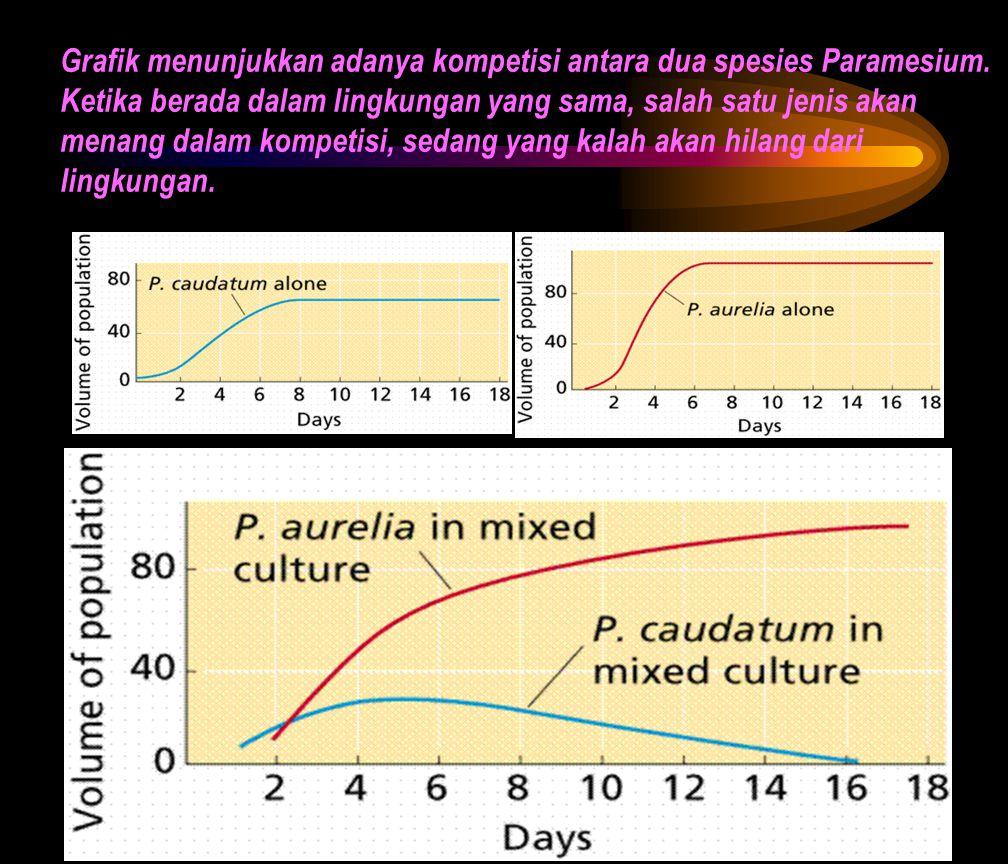 Grafik menunjukkan adanya kompetisi antara dua spesies Paramesium. Ketika berada dalam lingkungan yang sama, salah satu jenis akan menang dalam kompet