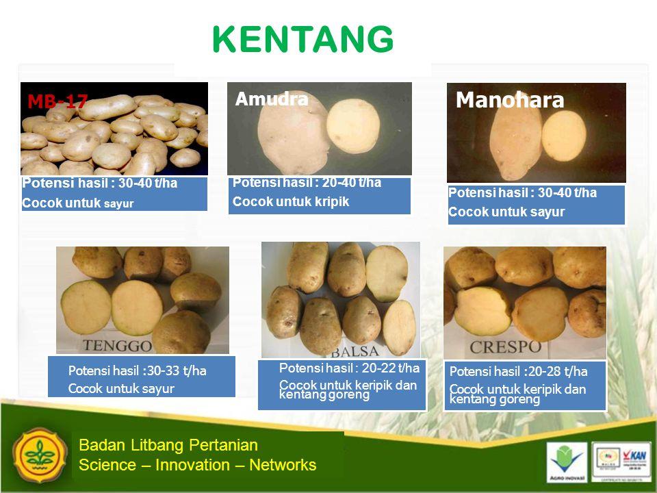 KENTANG MB-17 Potensi hasil : 30-40 t/ha Cocok untuk sayur Amudra Potensi hasil : 20-40 t/ha Cocok untuk kripik Manohara Potensi hasil : 30-40 t/ha Co