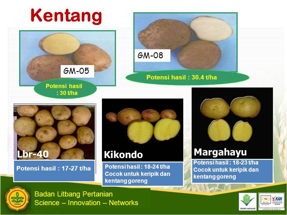 Kentang Lbr-40 Potensi hasil : 17-27 t/ha Margahayu Potensi hasil : 18-23 t/ha Cocok untuk keripik dan kentang goreng Potensi hasil : 18-24 t/ha Cocok