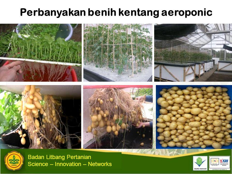 Perbanyakan benih kentang aeroponic Badan Litbang Pertanian Science – Innovation – Networks