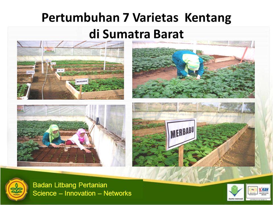 Pertumbuhan 7 Varietas Kentang di Sumatra Barat Badan Litbang Pertanian Science – Innovation – Networks
